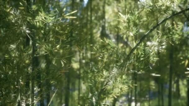 8k windiger ruhiger Araschiyama Bambushain
