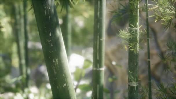 Zelené bambusové stromy lesní pozadí