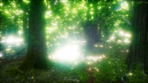 8 k ráno v lese na jaře Misty s paprsky slunce