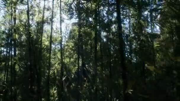 windigen ruhigen Araschiyama Bambushain