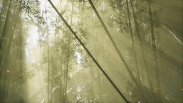 asijský bambusový les s ranní mlhou počasí