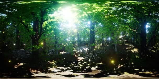VR 360 Ohntání v lese
