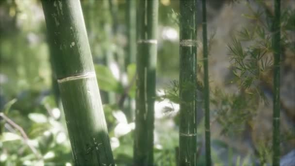 Green Bamboo trees forest background