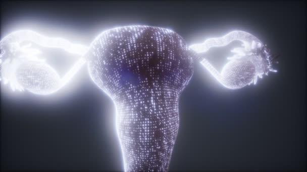Anatomie ženského reprodukčního systému