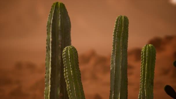 Arizona sivatagi naplemente óriás saguaro kaktuszokkal