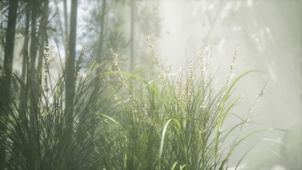 Travní květinové pole s měkkým slunečním světlem pro pozadí.