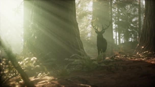 Gyönyörű szarvas az erdőben, csodálatos fényekkel reggelente.