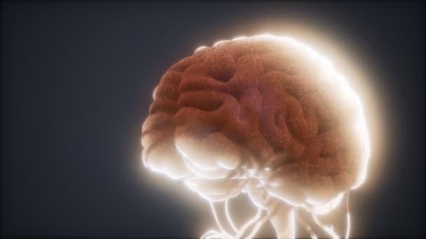 animovaný model lidského mozku
