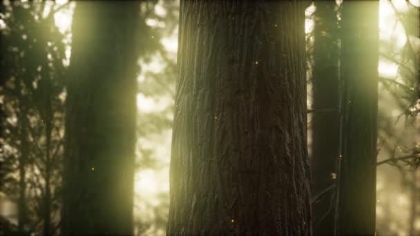 divoký borový les při východu slunce