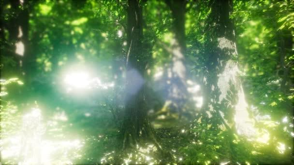 Reggel-a ködös nap sugarai tavaszi erdő
