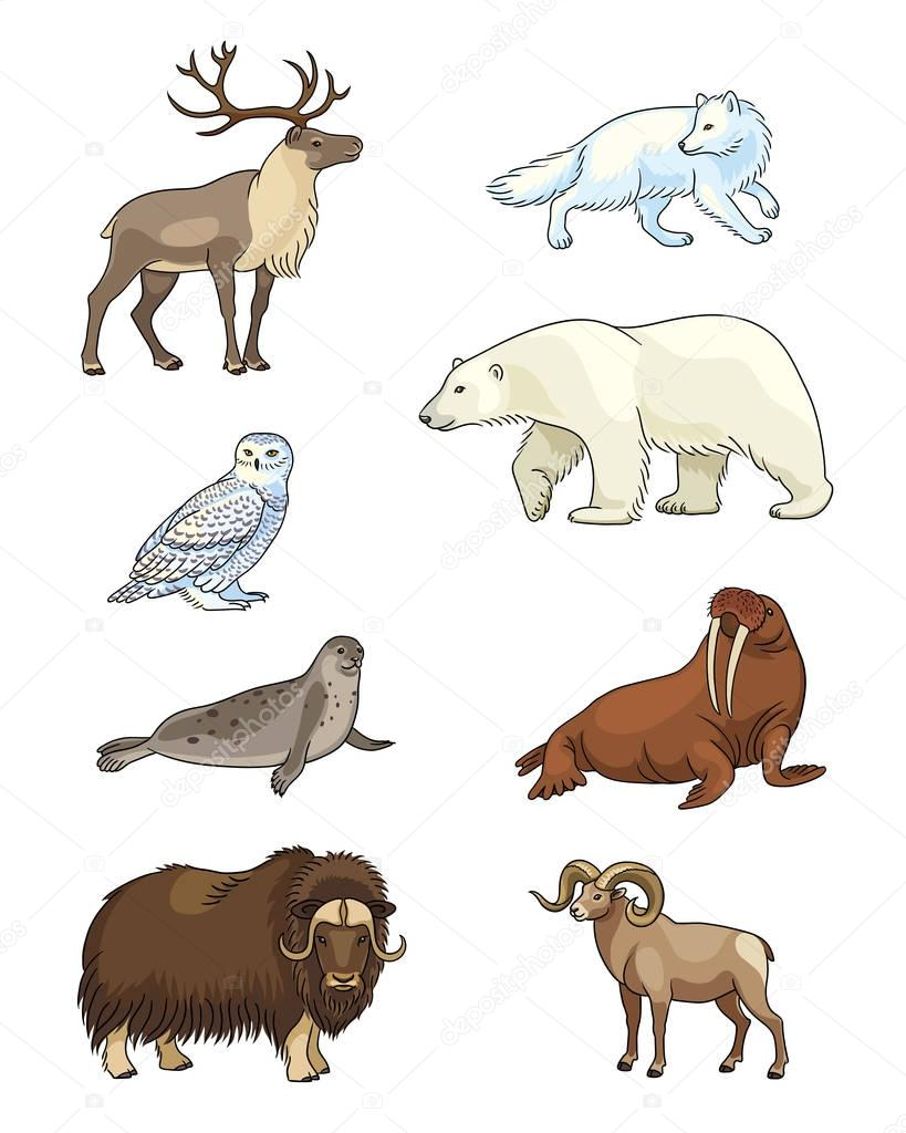 Set of vector Arctic animals