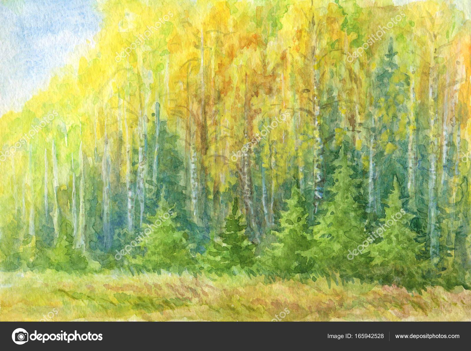 Sonbahar Orman Manzara Suluboya çizimi Stok Foto Rosinka 165942528
