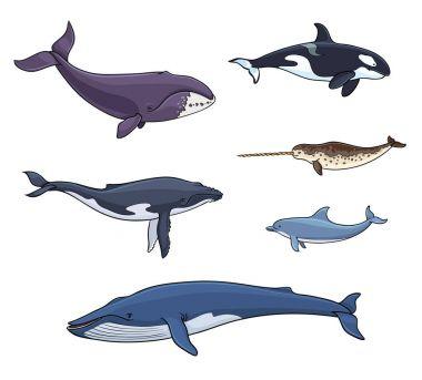 Sea mammals (cetacea) - vector illustration