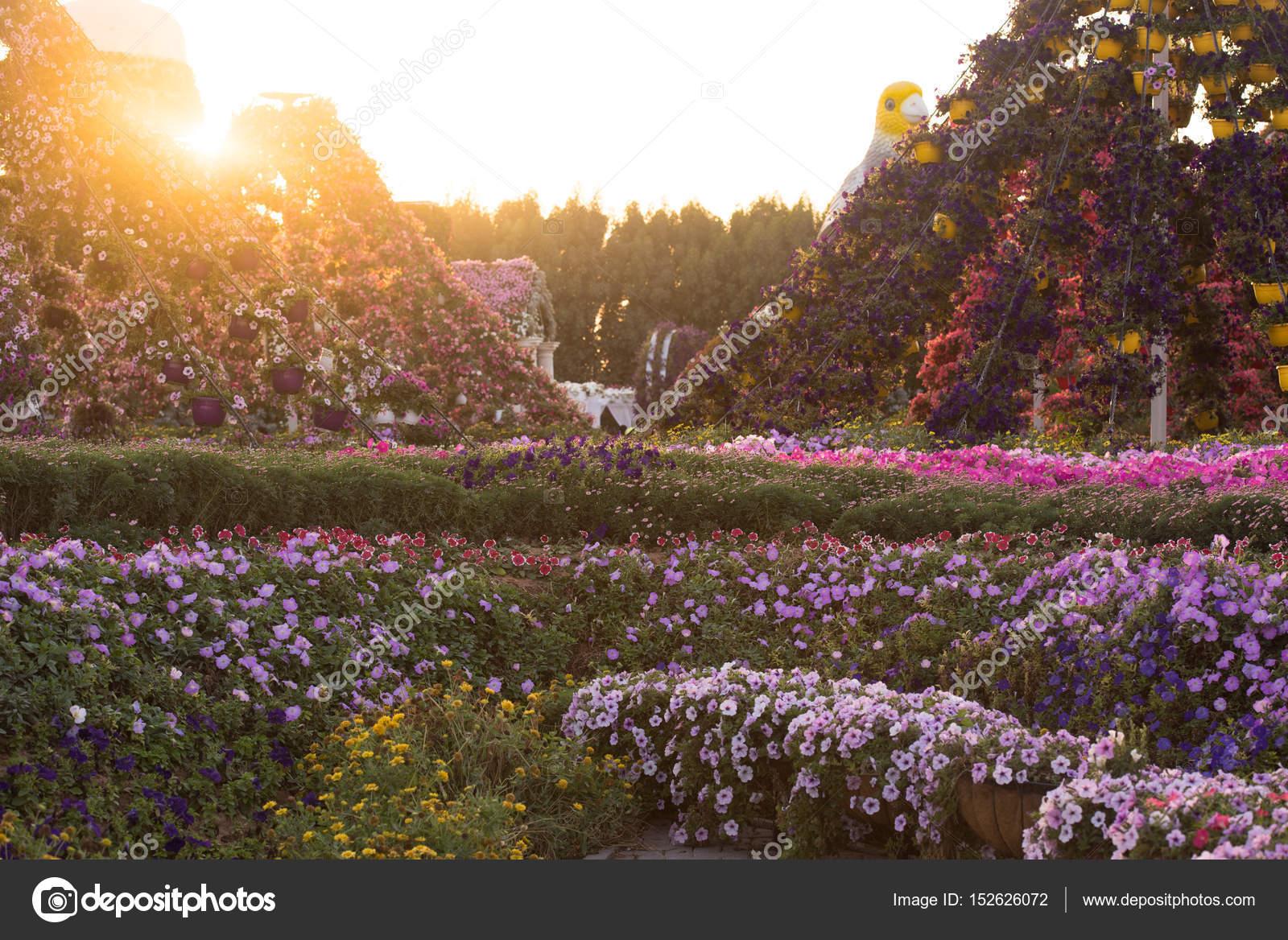 Dubai miracle garden — Stock Photo © .shock #152626072