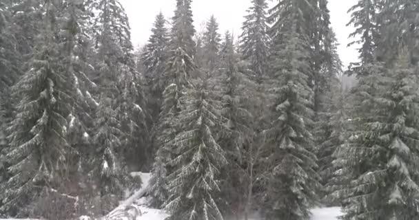 Aeria pohled na zimní krajinu