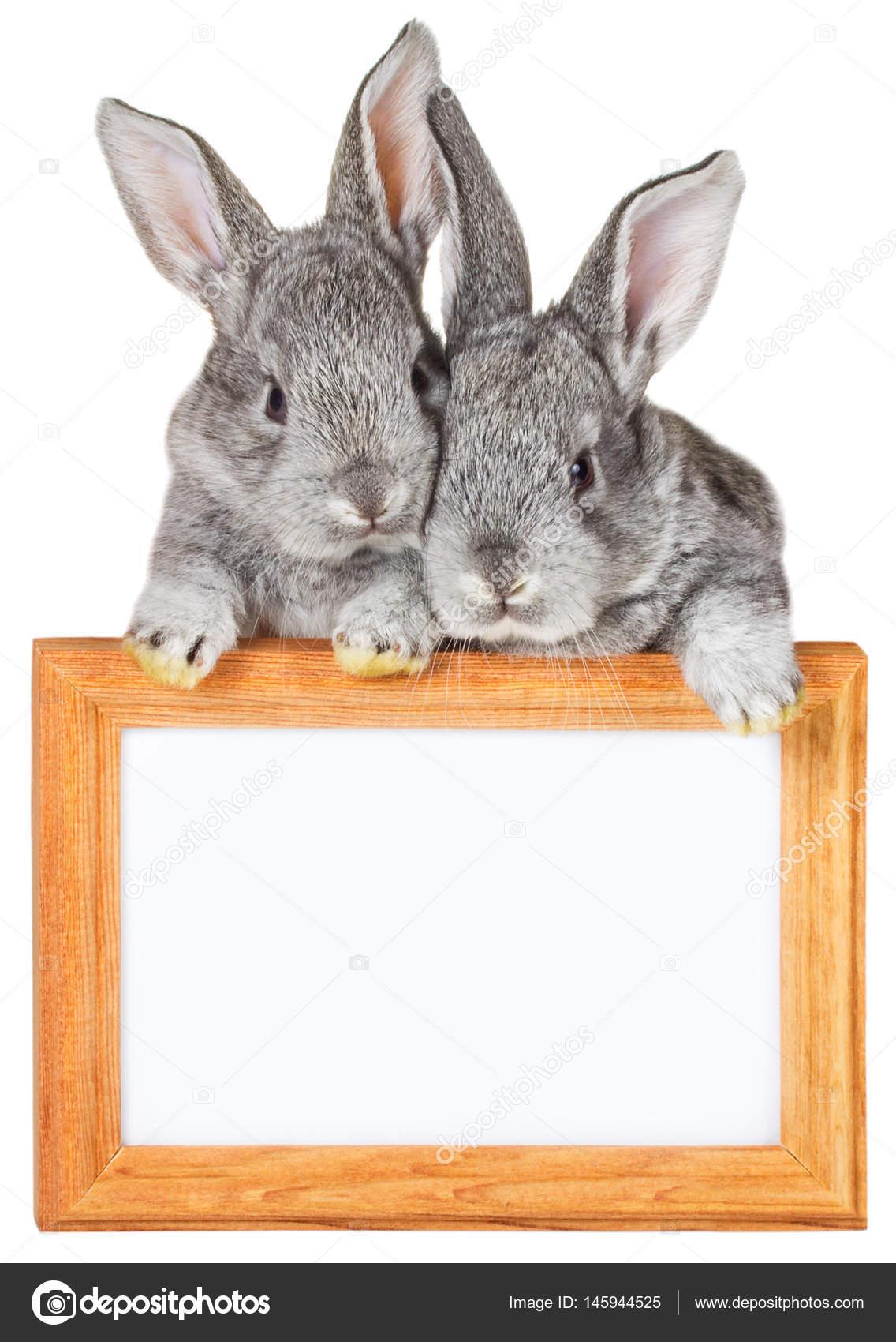 dos pequeños conejos gris con marco de madera — Foto de stock ...