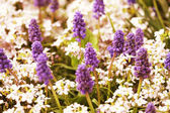 Fotografie krásné fialové květiny v zahradě