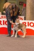 22th INTERNATIONAL DOG SHOW GIRONA 2018,Spain