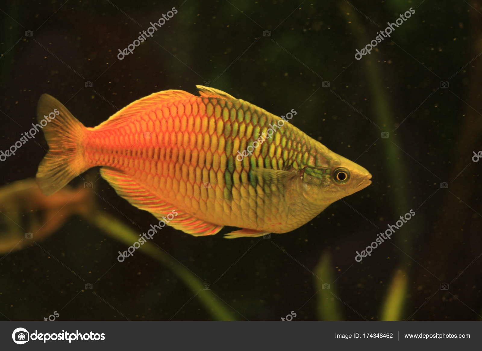 Honig Aquarium Fische & Aquarien