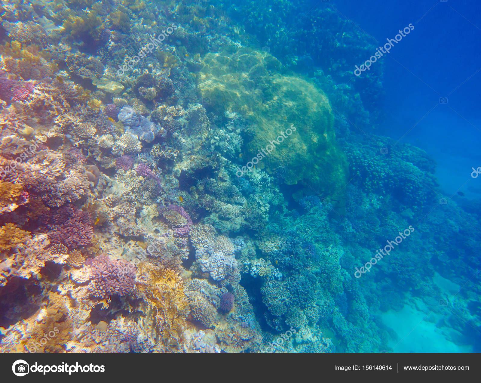 2018  u3011  ud83e udd19 images of coral reefs