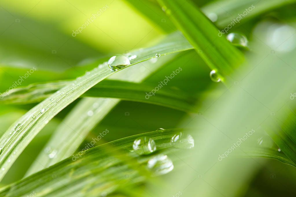 water drops on green grass, close-up