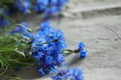 beautiful blue flowers of cornflowers, close-up