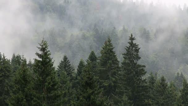 foresta di montagna nella nebbia