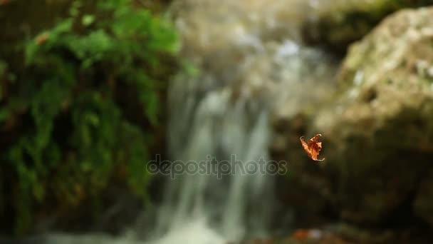 deska nad potokem podzimní sezóny