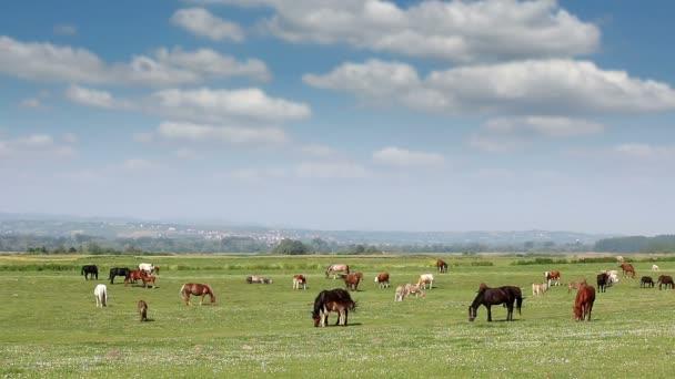 hospodářská zvířata na pastvinách krajiny