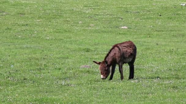 donkey on pasture spring season