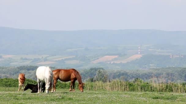 Pferde und Fohlen auf der Weide Frühjahrssaison