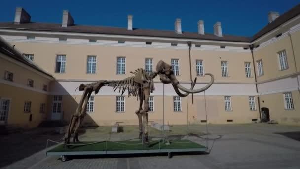 mamutí kostry prehistorických zvířat