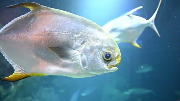 Meeresfische schwimmen unter Wasser