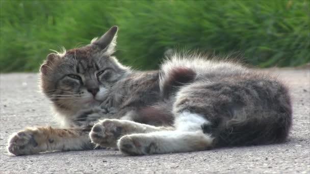 Funny grey cat