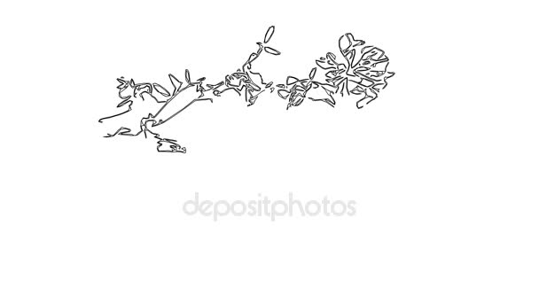 Vicia növény vagy egér borsó. HD-videó