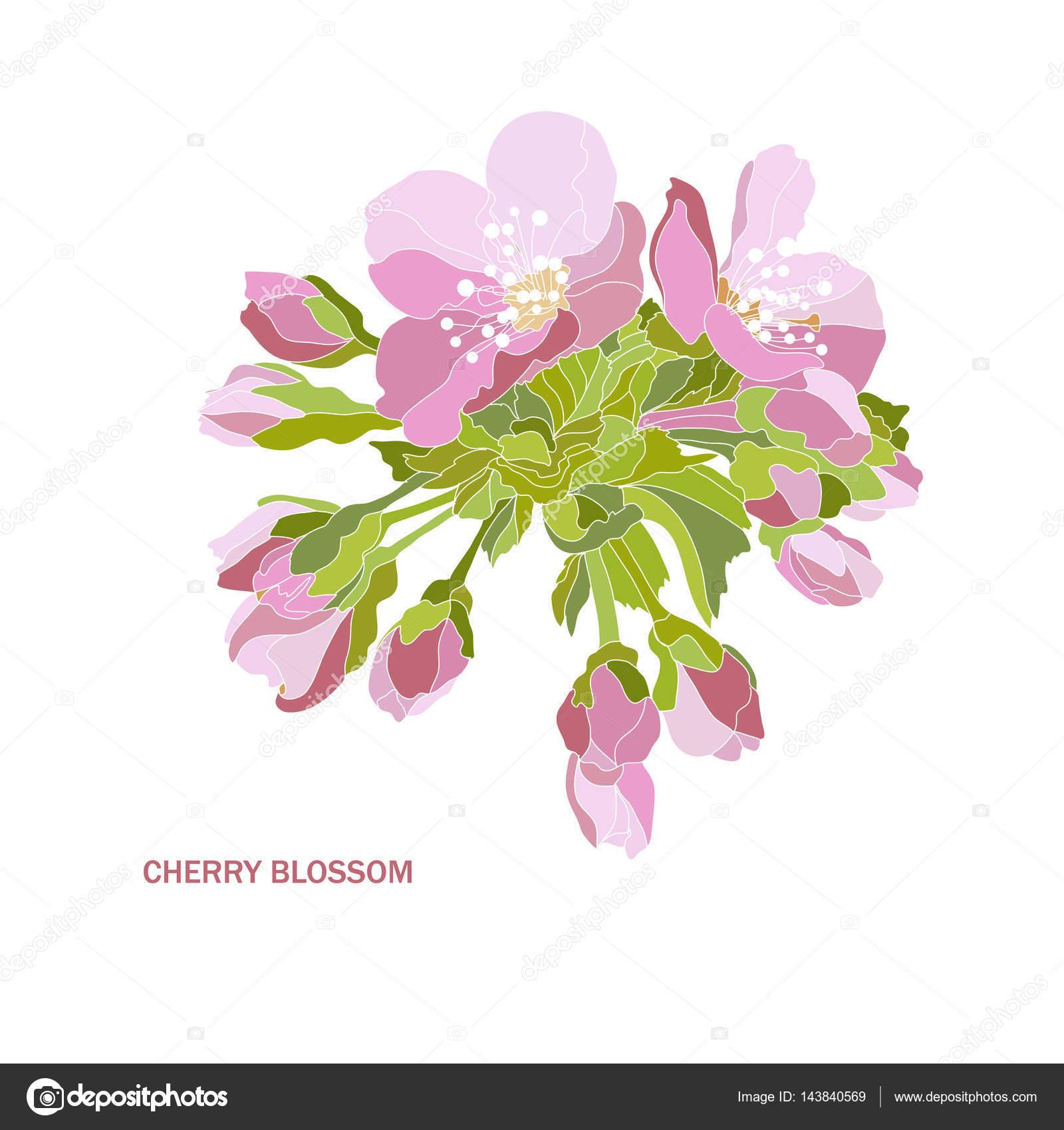 Ozdobny Kwiat Wiśni Grafika Wektorowa Chantall 143840569