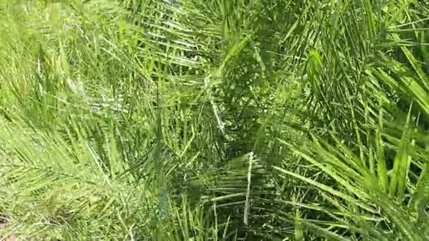 Tropicale verde lascia la priorità bassa