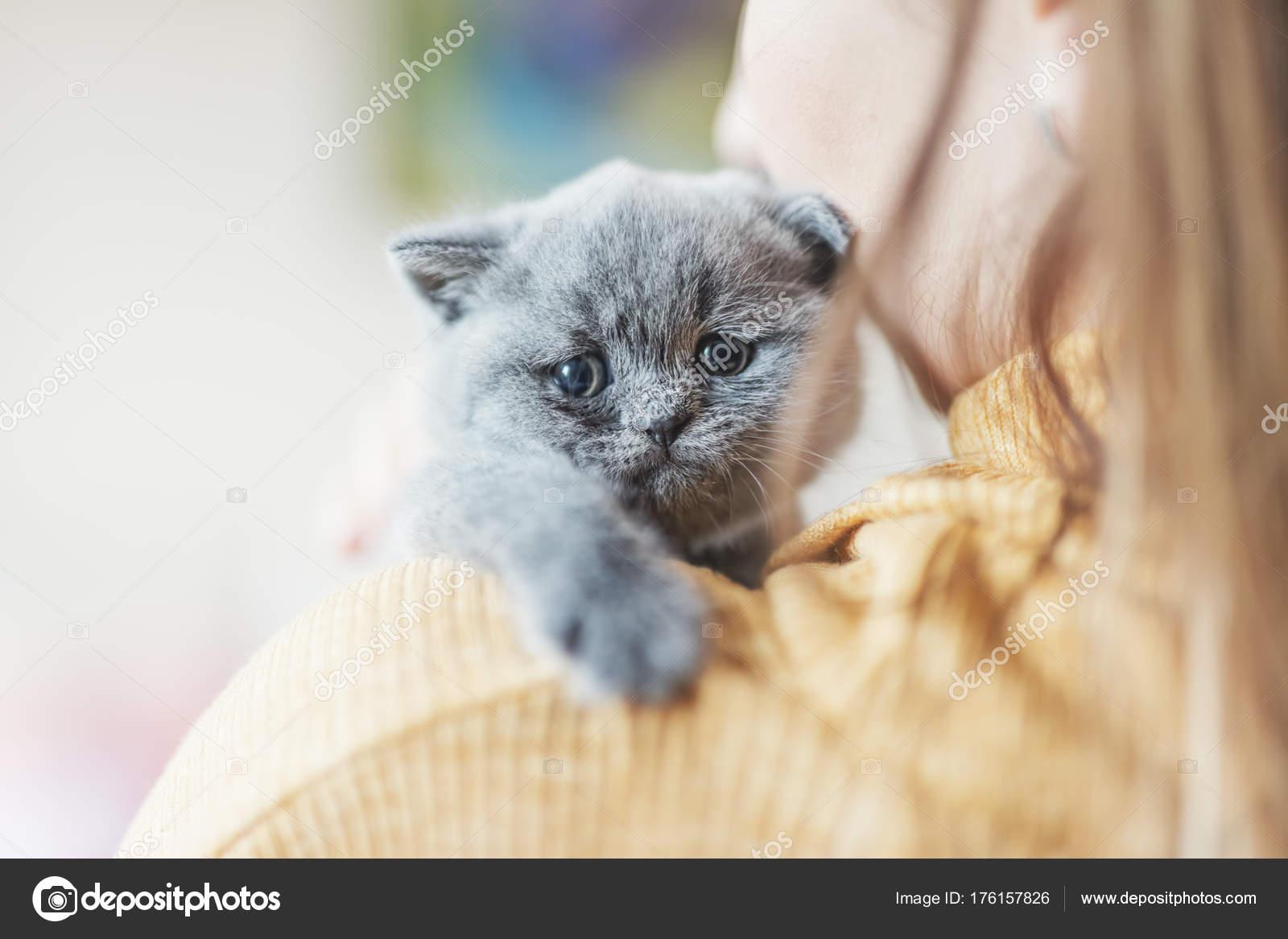 Baculaté černé kočička obrázky