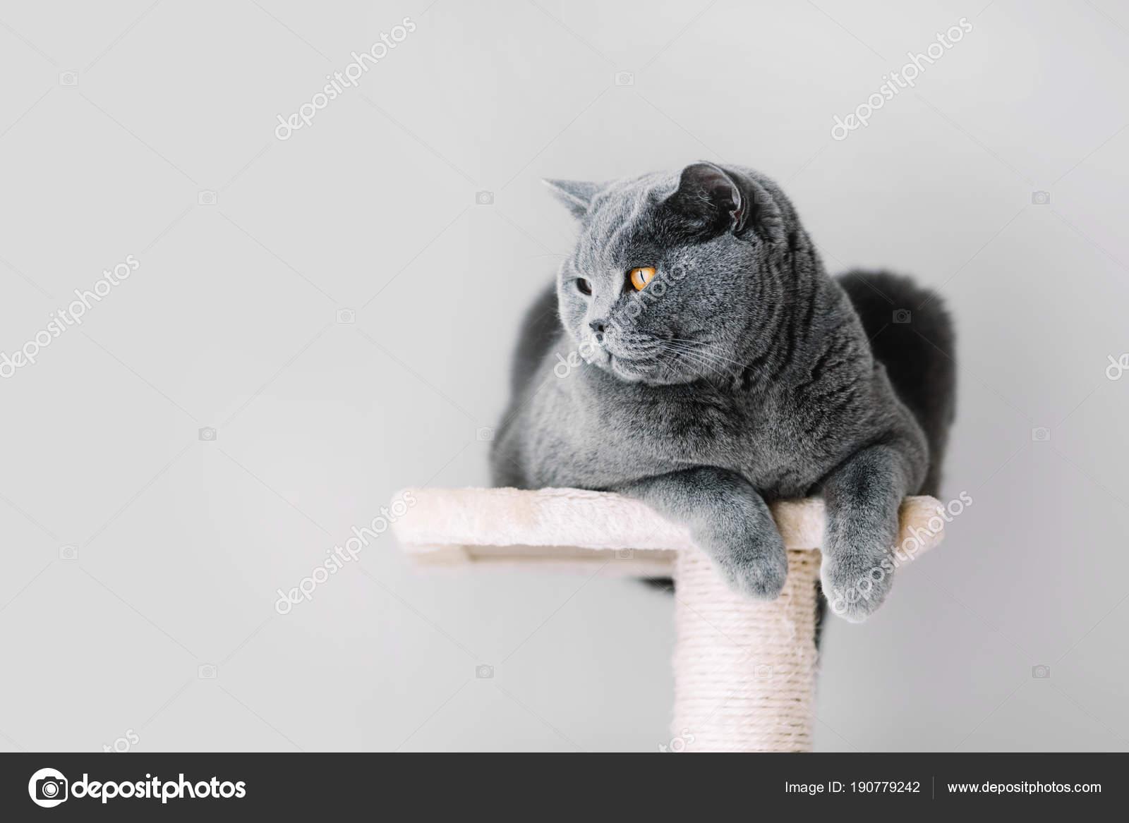 Tuk pussy nahé fotky