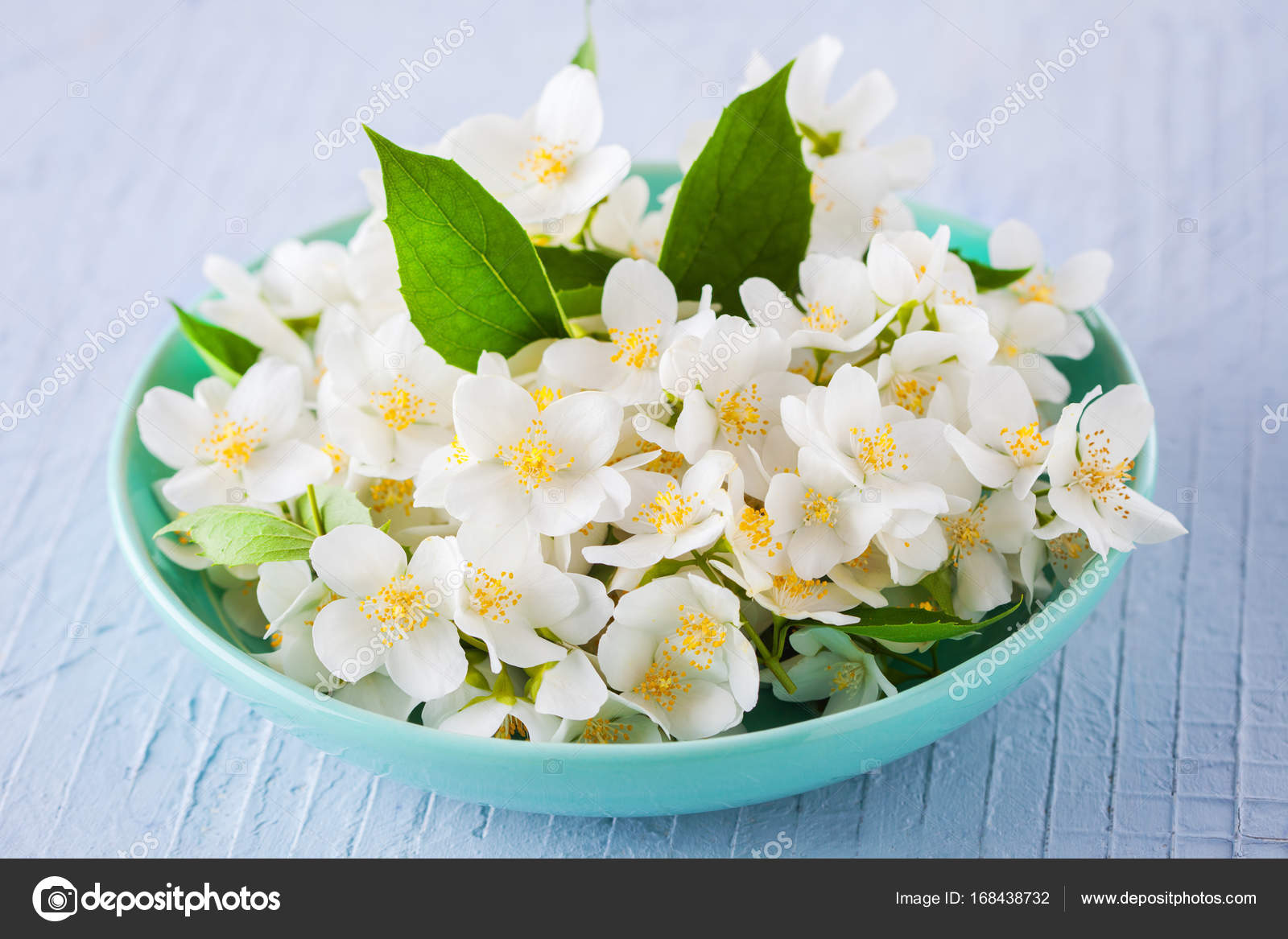 Beautiful jasmine flowers stock photo matkawariatka 168438732 beautiful jasmine flowers in blue bowl on white background photo by matkawariatka izmirmasajfo