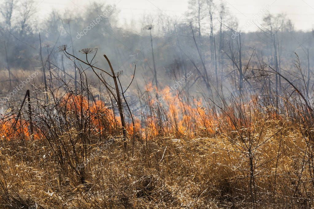 Forest fire near the village spring. burning dry grass . I was at the epicenter