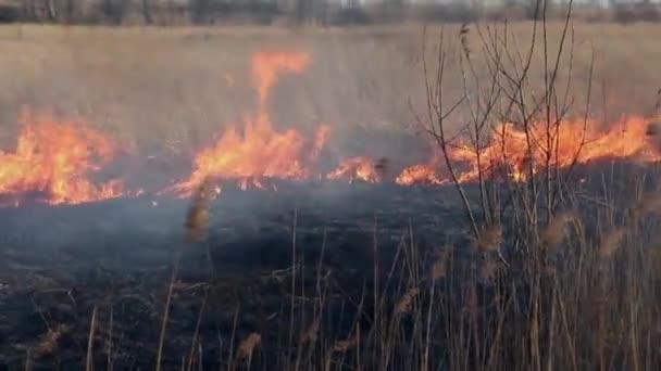 Incendio boschivo vicino alla sorgente del villaggio. bruciando lerba secca. Sono stato lepicentro