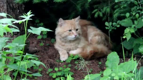 red stray cat