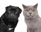macska és kutya együtt