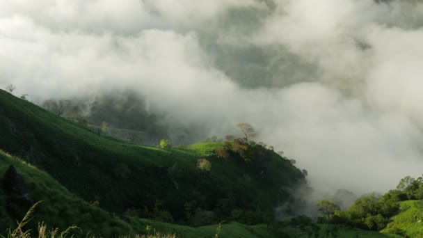 Panning shot of Sri Lanka landscapes nature