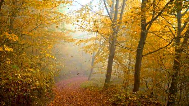 Slow motion shot of falling orange leaves in autumn park. Foggy moring light