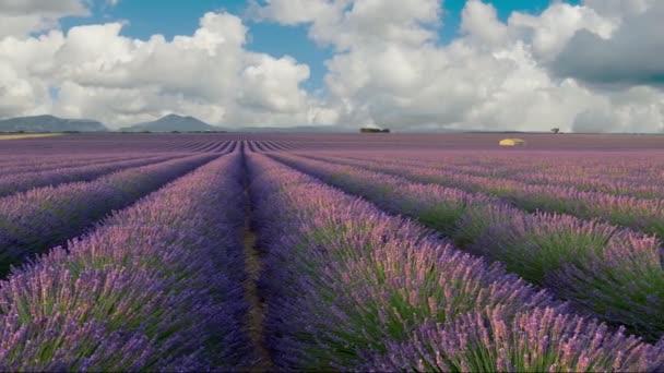 Panoramatický záběr nekonečného levandulového pole v Provence ve Francii. Kvetoucí fialové voňavé levandulové květy kolébající se ve větru. Běžící pozadí mraků. Vysoce kvalitní záběr, Uhd, 4k