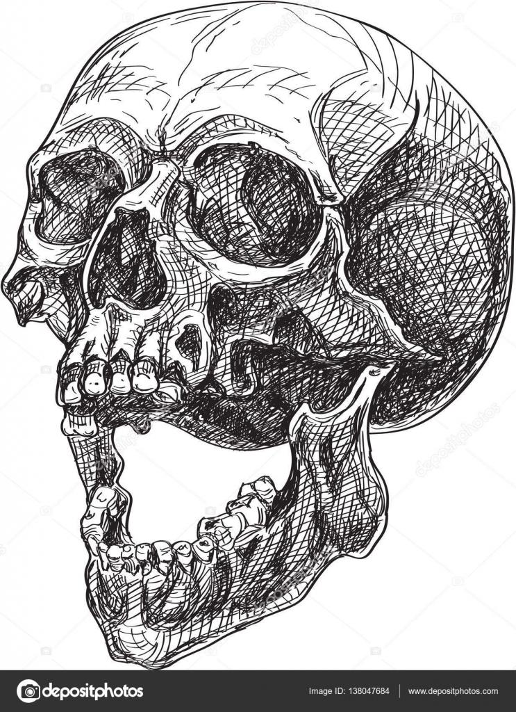 Skull Side View Stock Vector Buravtsoff 138047684