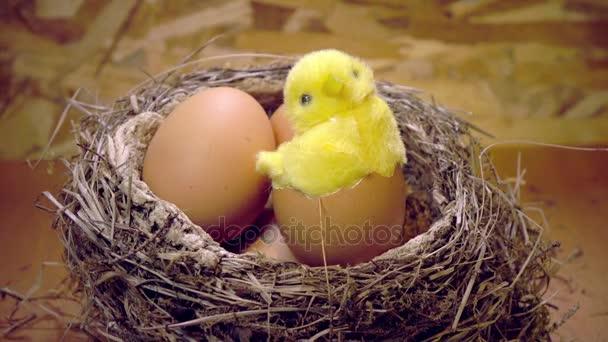Játék csirke tojás egy fészek tojás héjában
