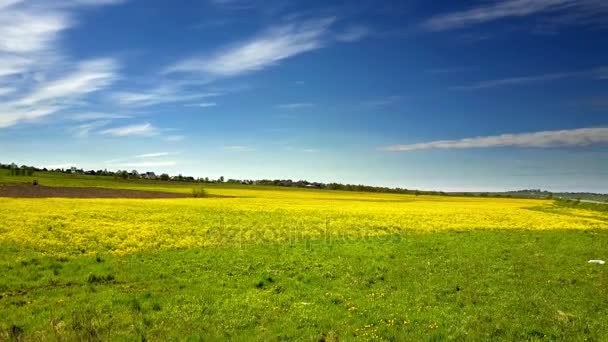 Aero view from drone in field of colza Brassica napus in sunny day